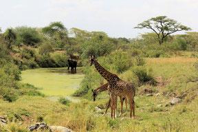 Kilimandscharo Besteigung und Safari Abenteuer