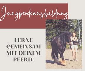 Professionelle Ausbildung für Dein Pferd