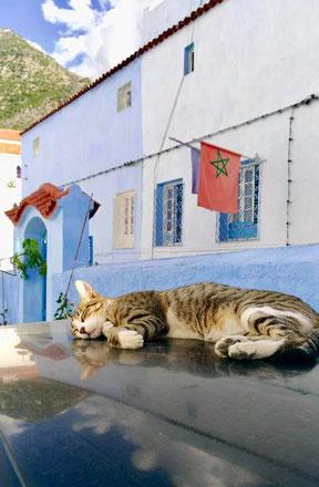 (写真中央の   赤色に緑の星印の旗は   モロッコの国旗です)
