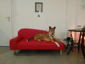 Gian auf dem Hundesofa