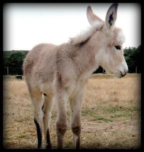 Doudou , l'un des nombreux animaux de la ferme