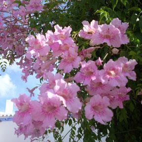 Ibiza Gartenbau, Planung und Pflege