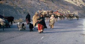 Nomades Tziganes Kutchis sur les routes d'Asie Centrale