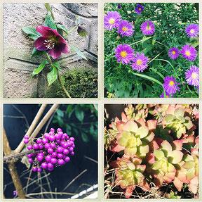 Je vous donne une liste de plantes qu'il vous faut et vous indique comment les chouchouter.
