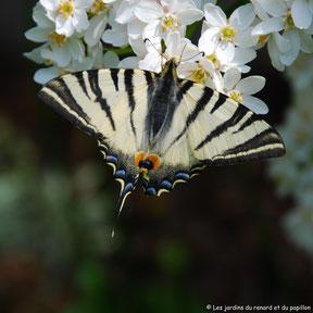 Protéger la biodiversité en ayant une démarche écoresponsable.
