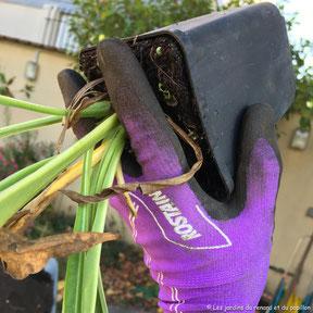 Je vous apprend à prendre ne main votre jardin.