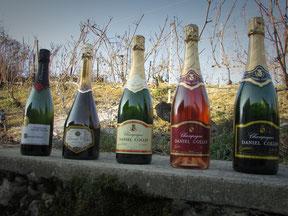Les cinq cuvées de champagnes proposées par le vigneron champagne Daniel Collin : Champagne rosé, champagne tradition, cuvée sensations, cuvée grande réserve et cuvée Esprit Shiraz