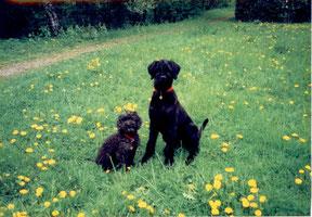 Balou,10J und Dux,8Mt im Mai 2000