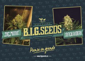 comprar semillas de marihuana online en chile