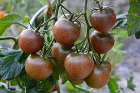 Black Cherry, (c) Alexe von Wurmb