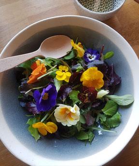 essbare blüten.stiefmütterchen salat,