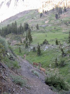 Aufstieg zum Franklin Pass