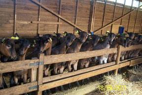 les chèvres nous regardent, fromageriedupurdeau.fr