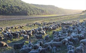 Culture raisonnée protectrices de l'environnement.