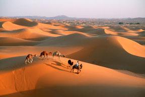 Viaggi nel deserto del Marocco : Dune e  palmeti