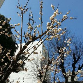 春よこい♪早くこい♪
