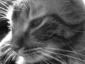 Bild: Katze Fotografie