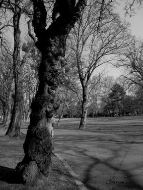 Bild: Baum Fotografie