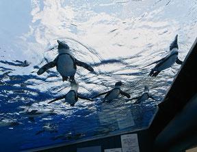 2018/07/14 サンシャイン水族館