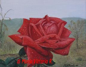 rosa rossa in giardino, olio su tela cm 24x30, 2010