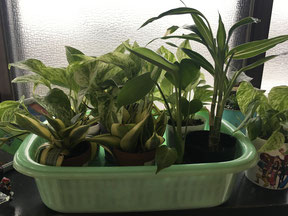 受験生 植物