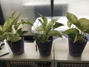 受験生 ストレス 植物