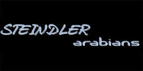 Steindler Arabians