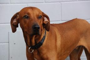 Hundehort Rudel-Treff -Foto Check-In-Liste_2