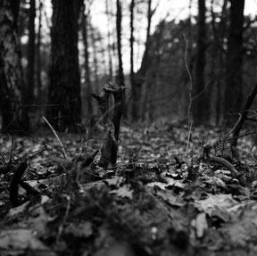 zwart/wit foto in een bosgebied. Analoog gefotografeerd, de verbeelding is 2 vechtende vossen.
