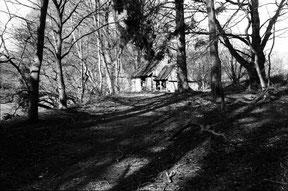 analoge zwart/wit foto van een schuur in het bos, met licht en schaduw werking.