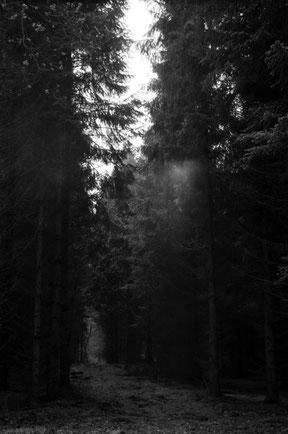analoge zwart/wit foto van een pad lopend door het bos, met interresante lichtinval.