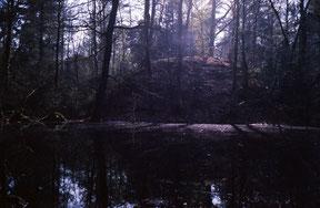 analoge kleurenfoto van bos