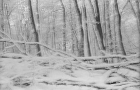 windy forest in the winter, analog b/w photo.