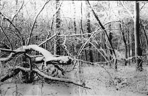 salamanderachtig figuur dat door de bossen springt, analoog zwart/wit foto.