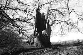zwart/wit foto analoog gefotografeerd, 14 shades of grey