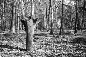 analog black and white photo of a treetrunk upside down