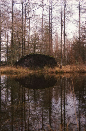 reflection of a fallen tree on the water, analog colour photo.