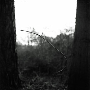 analoge zwart/wit foto van een sierlijke tak tussen 2 bomen