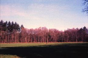 analoge kleurenfoto van een bosrand