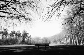 analog black and white photo of a parkbench