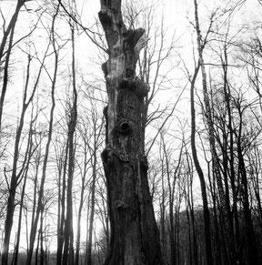 analoge zwart/wit foto met een kenmerkende boom in de voorgrond.