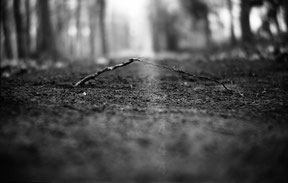 landart of some treeroots connecting in the forest, analog b/w photo.