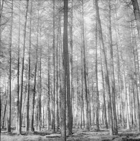 analoge zwart/wit foto van een bomenrij met licht en schaduw