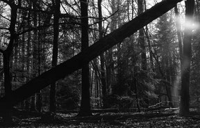 analog b/w photo of a mystical landscape in the forest.