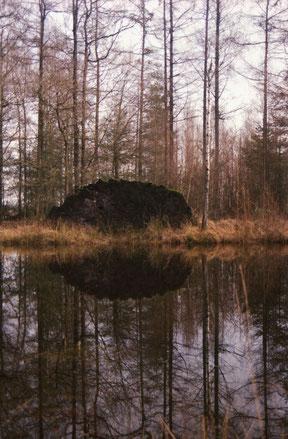 reflectie van een omgevallen boom in het water, analoge kleuren foto.