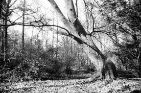 analoge zwart/wit foto van een gebogen boom