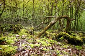 groene bos omgeving met een expressieve boomstronk, analoge kleurenfoto.