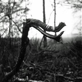 analoge zwart/wit foto van een dierfiguur in een tak