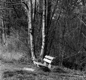 Analoge zwart/wit foto van een bankje met vogelhuisje in een bosrijke omgeving.