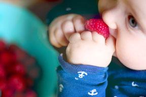 Babygeleitete Beikost  Workshops & Beratung